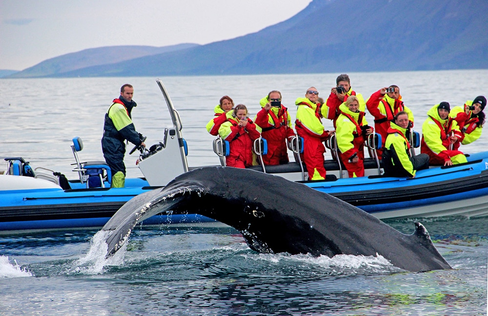 Whale watching rib safari Atlantik DMC PCO Incentive Cruise Events Conferences Iceland